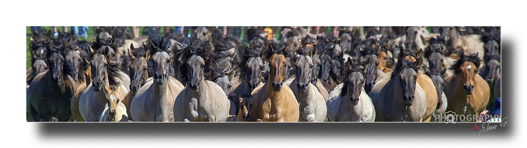Die Herde _ OK_4A04883r_1800