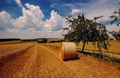 Die heutige Getreideernte, ...
