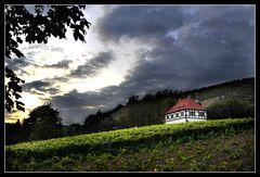 Die Hoflößnitz – das einzige zertifizierte ökologisch wirtschaftende Weingut Sachsens