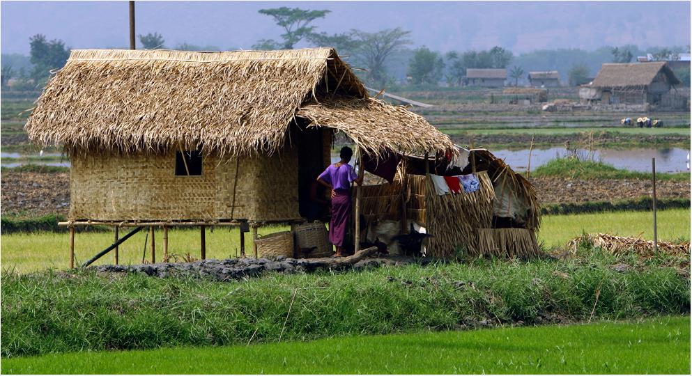 Die Hütte im Reisfeld
