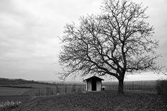 Die Hütte und der Baumwächter