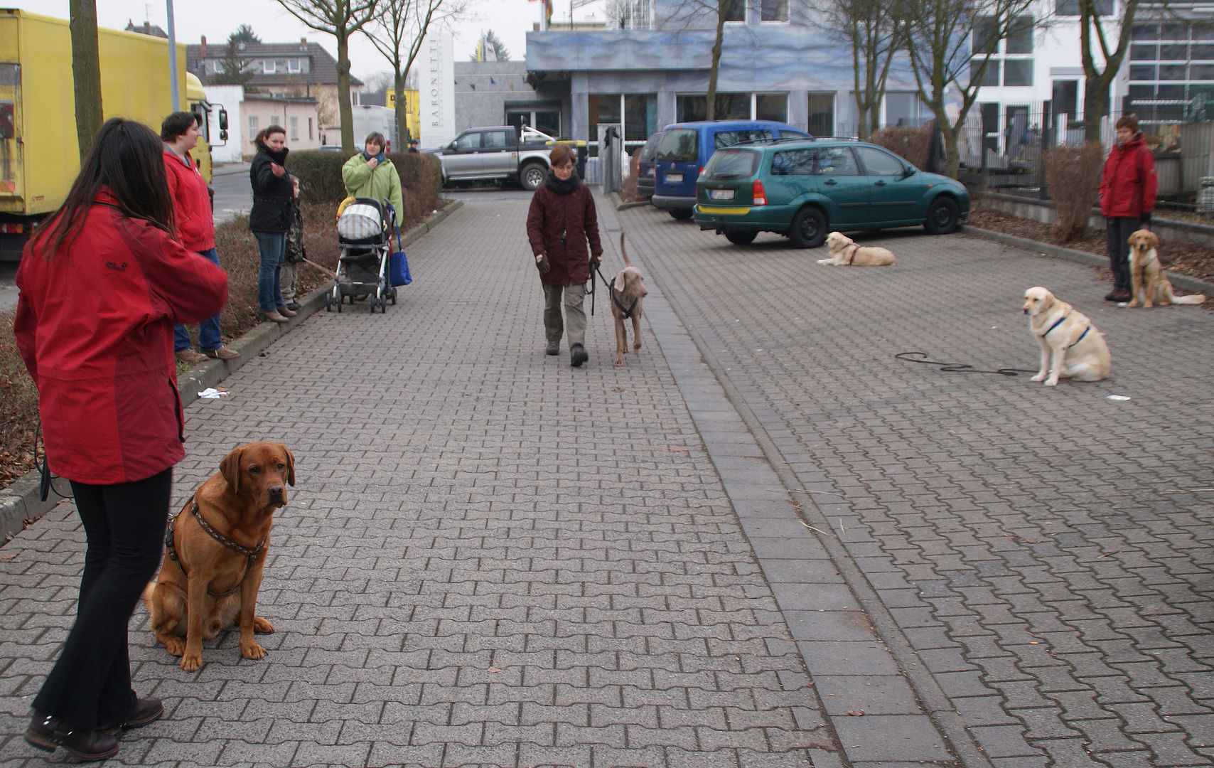 Die Hundeflüsterin (1): Regieanweisungen