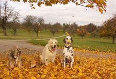 die Hundegang im Herbststurm...