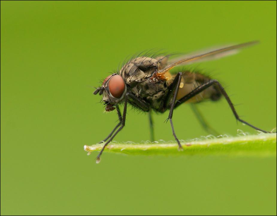 Die hundertvierte Fliege