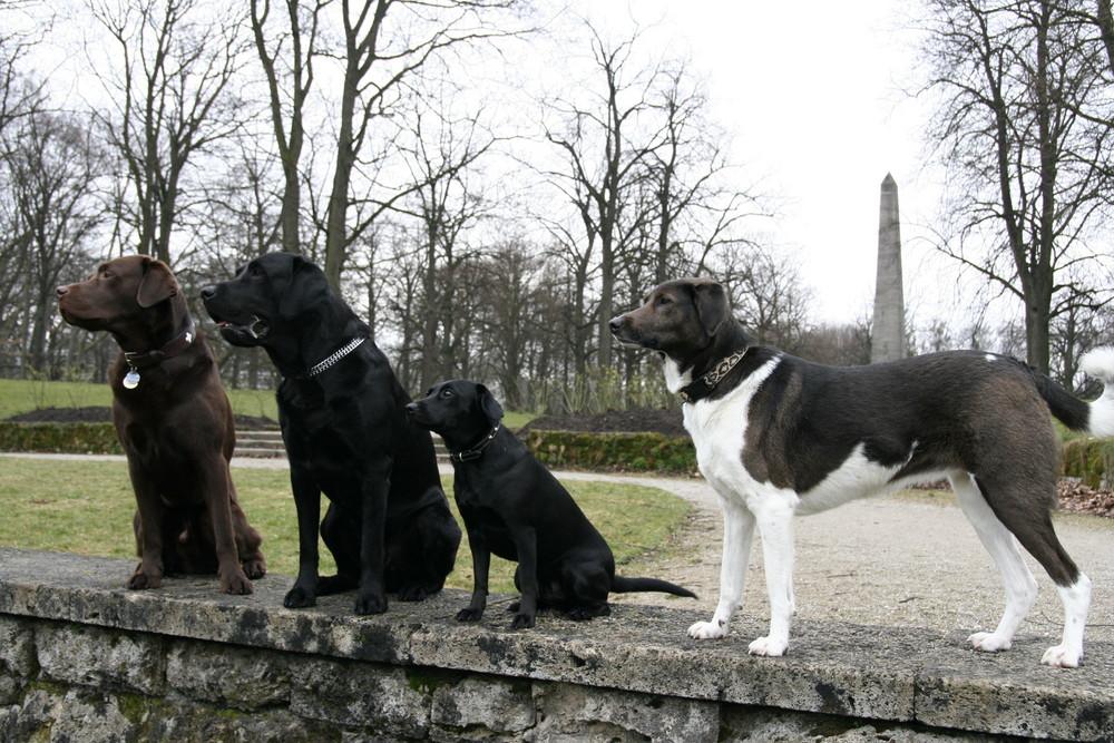 Die Hundeschule aus dem Münchne Luitpoldpark