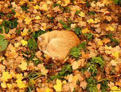 Die Insel-Katze.....