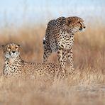 Die Jäger der Savanne