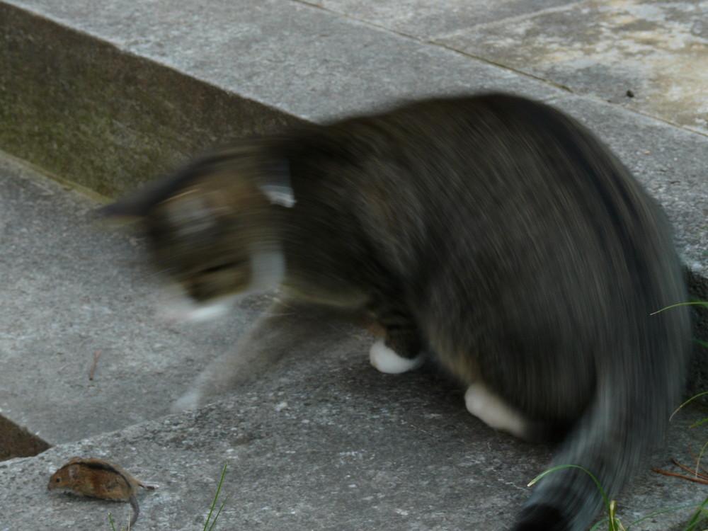 die Jagd nach Mäusen...