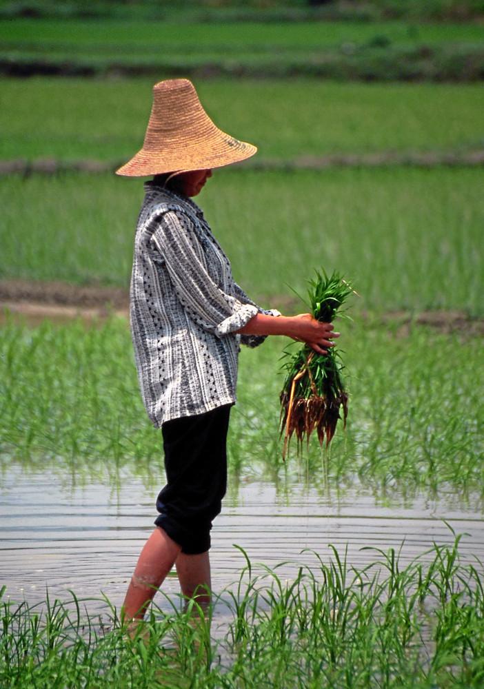 Die Junge Landwirtin ...