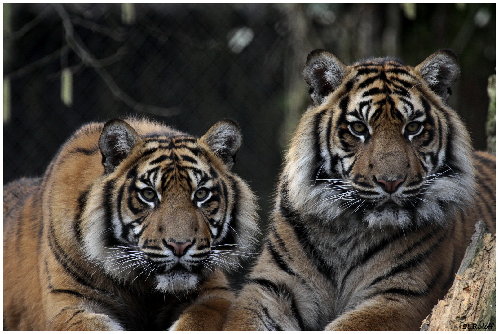 Die jungen wilden aus dem Zoo Rheine