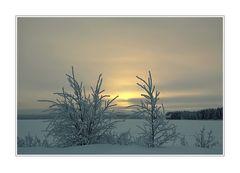 Die kalte Sonne