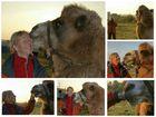 Die Kamelflüsterin