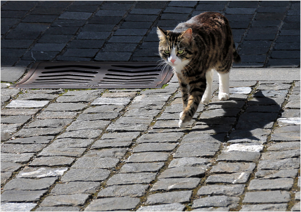Die Katze......
