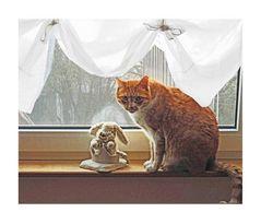 Die Katze am Fenster