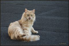 ...Die Katze auf dem Dach...