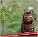 die katze auf dem heißen....