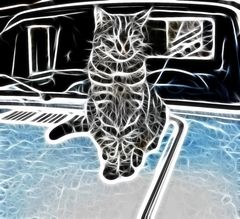 Die Katze auf dem heißen Autoblech