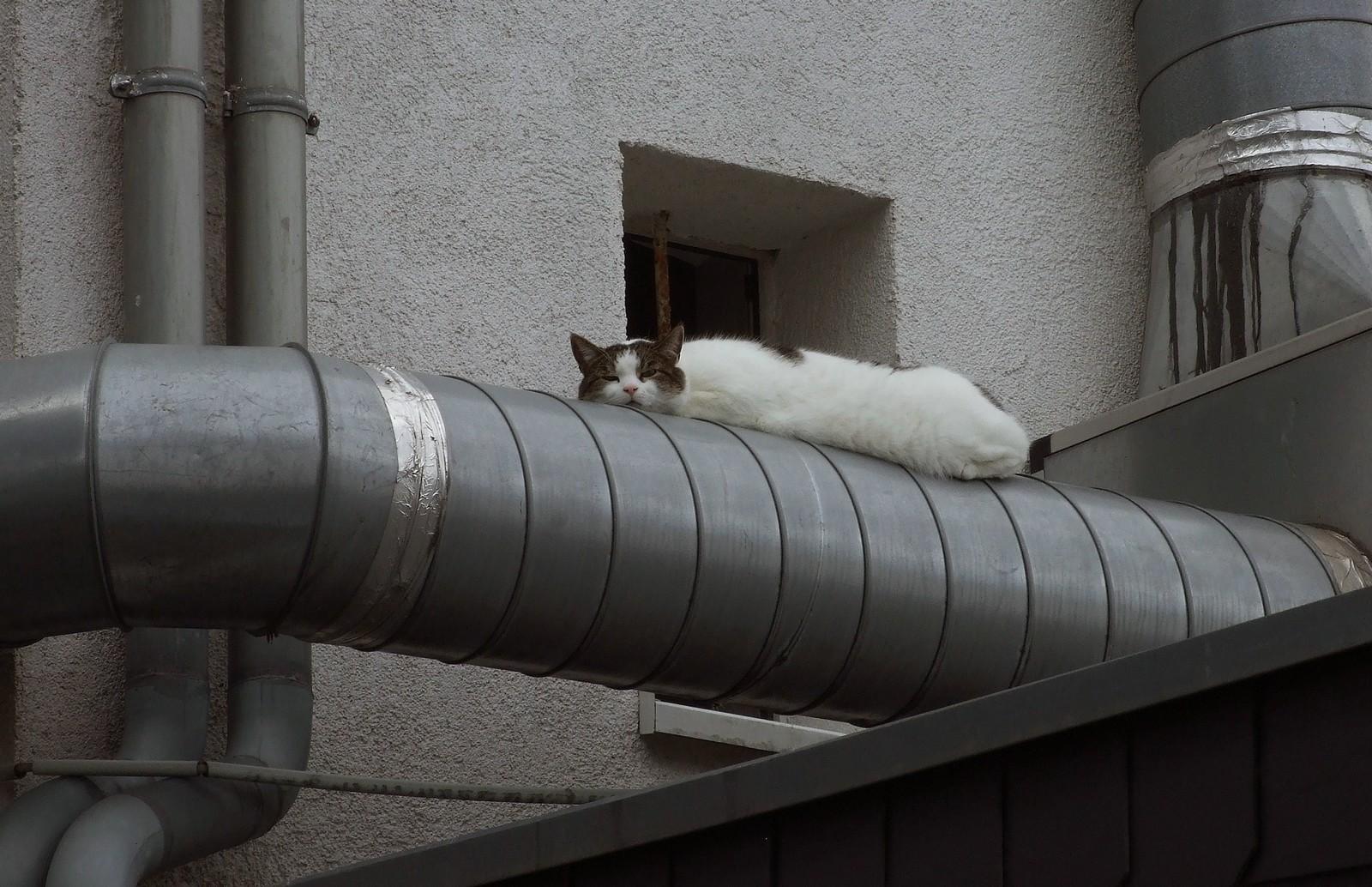 Die Katze auf dem heißen Blechrohr