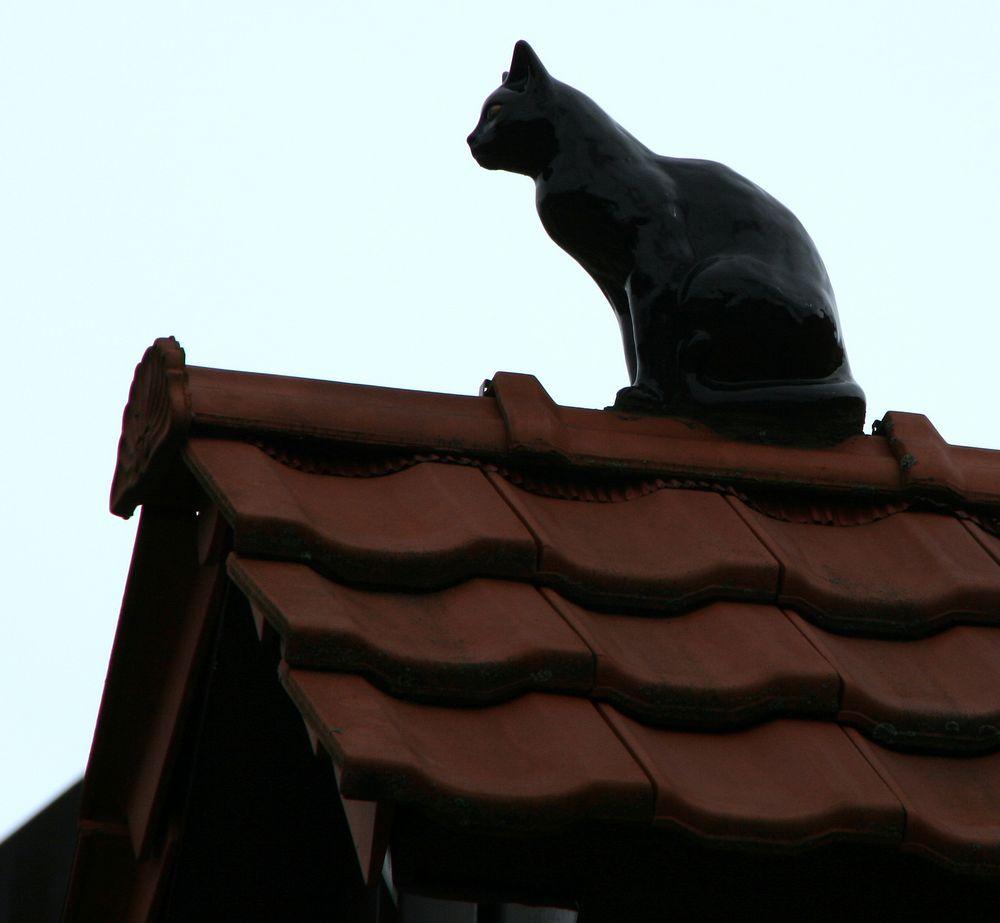 Die Katze auf dem heißen Ziegeldach oder so ähnlich... ---> Gelöst