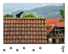 Die Katze auf dem nassen Dach