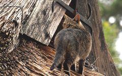 Die Katze auf dem Rohrdach