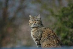Die Katze auf dem Wellblechdach