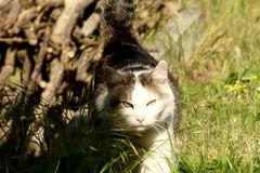 Die Katze aus der Sicht der Maus