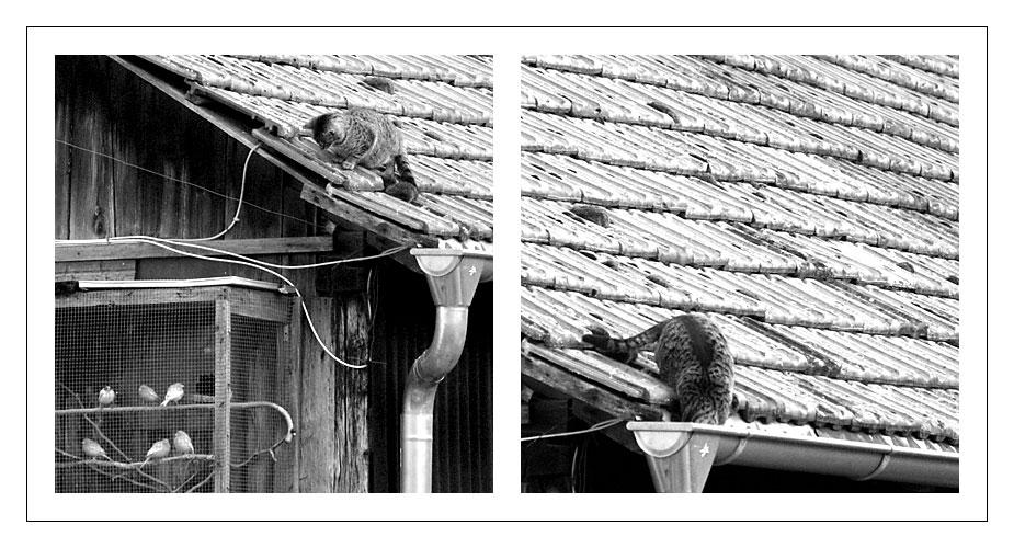 die katze geht solange zur vogelgalerie, bis sie bricht ...