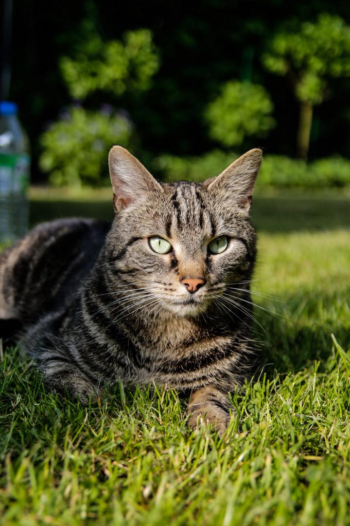 Die Katze meines Cousins