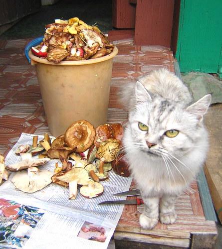 Die Katze Musja und die Pilze