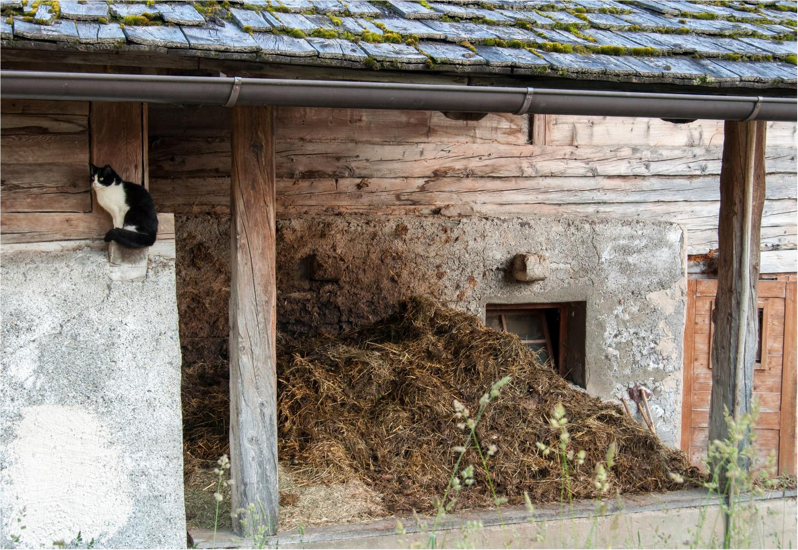 Die Katze neben dem Misthaufen Foto & Bild | natur, katzen, tiere ...