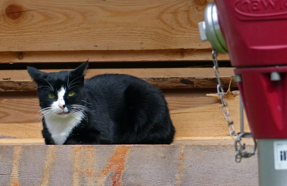 Die Katze und der Hydrant