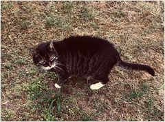 Die Katze von Frau Doktor S.