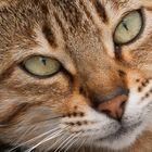 Die Katze von nebenan