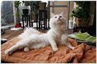 Die Katze von Welt trägt jetzt Netz :-)))