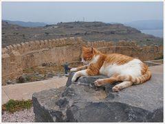 Die Katzen von Lindos