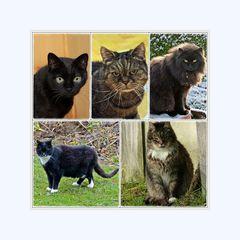 Die Katzenbande und ich wünschen allen Besucher meiner Seite,ein schönes Wochenende.