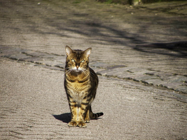 die Katzenschönheit in Lichtenberg