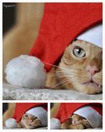 Die katzenstube wünscht ein frohes Fest....
