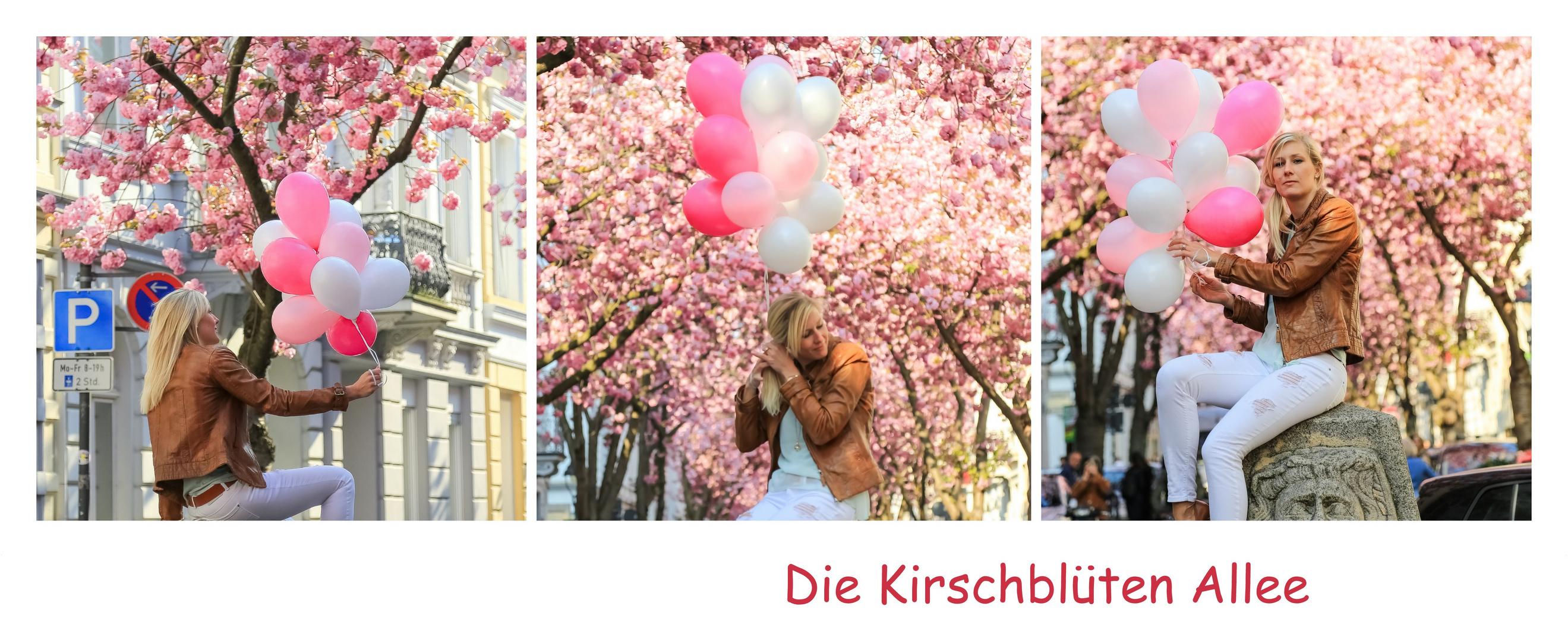 Die Kirschblüten-Allee