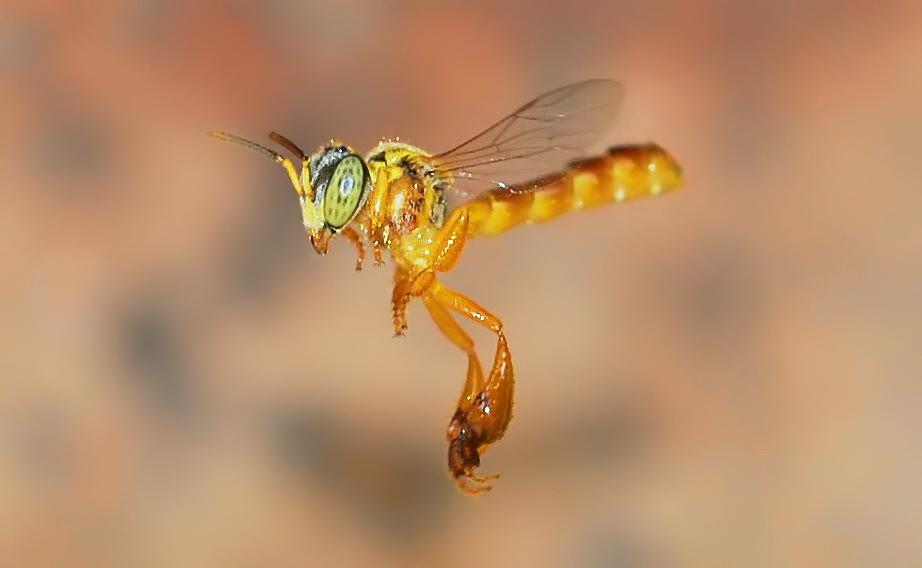 Die kleine Biene ganz gross
