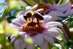 Die kleine Biene Maja # P1120310