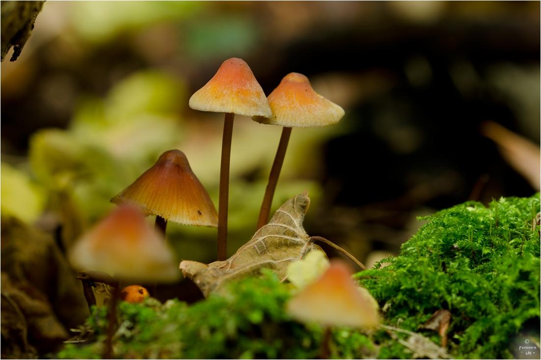 ...die kleine Pilzgruppe