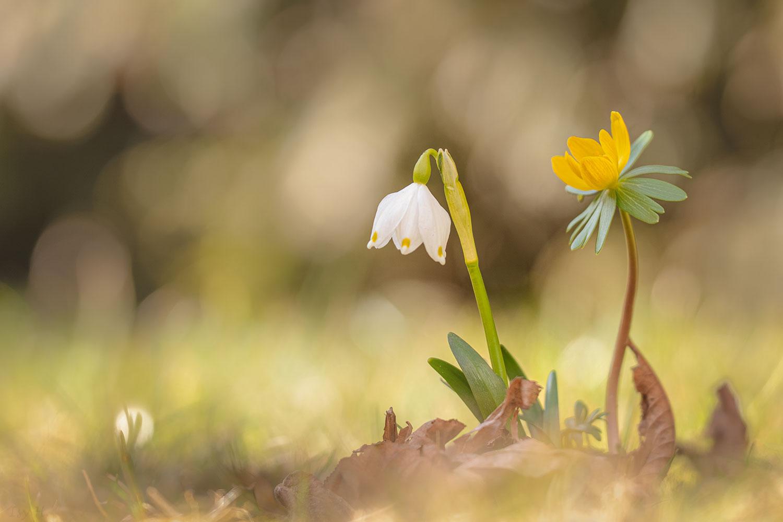 Die kleinen Kostbarkeiten der Natur wahrzunehmen, ist Glück