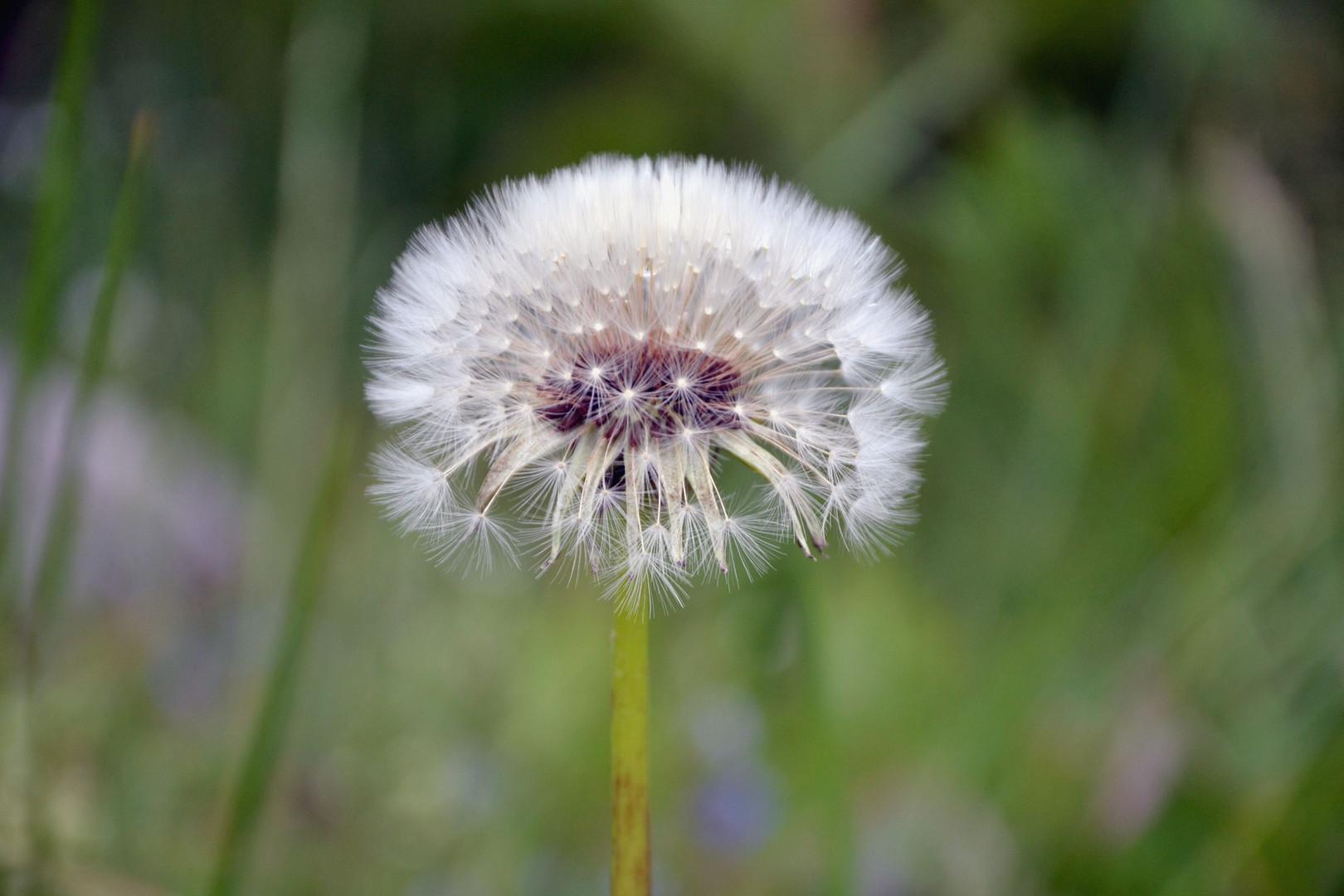 Die kleinen Wunder erfreuen uns das Leben.