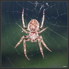 Die klitzekleine Spinne...