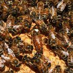 Die Königen und die Bienen 3