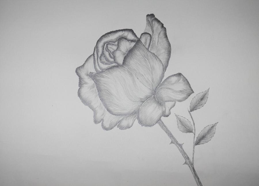 Zeichnungen Für Anfänger Bleistift Blumen Hylen Maddawards Com