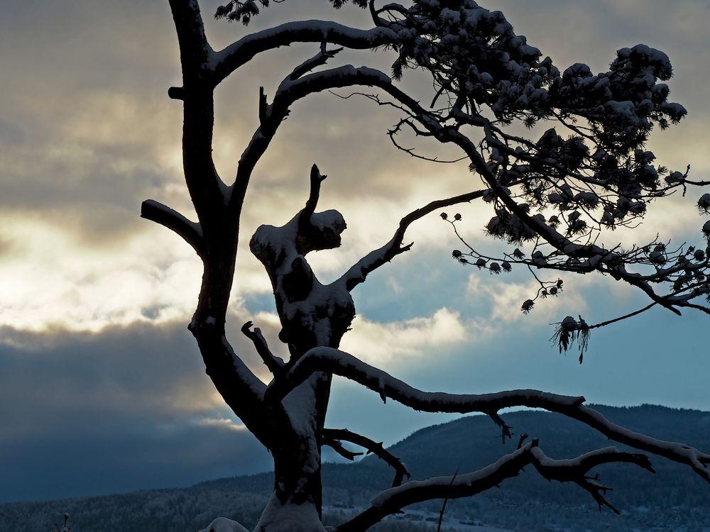 Die Kraft, die in einem Baum steckt... - La force qui réside dans un arbre...