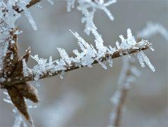 Die Krallen des Winters